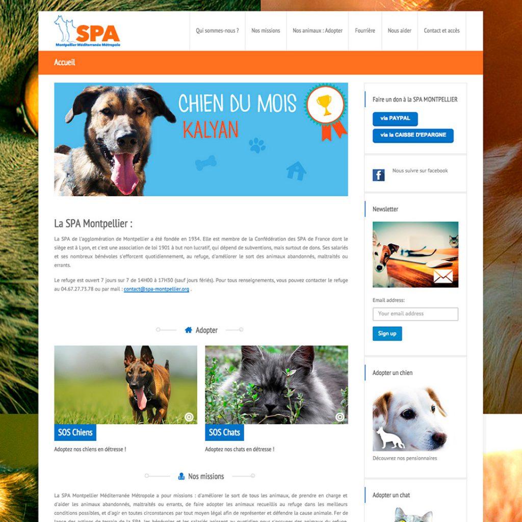 SPA de Montpellier, client Joli Projet, actus clients, blog, site web, succès Joli Projet